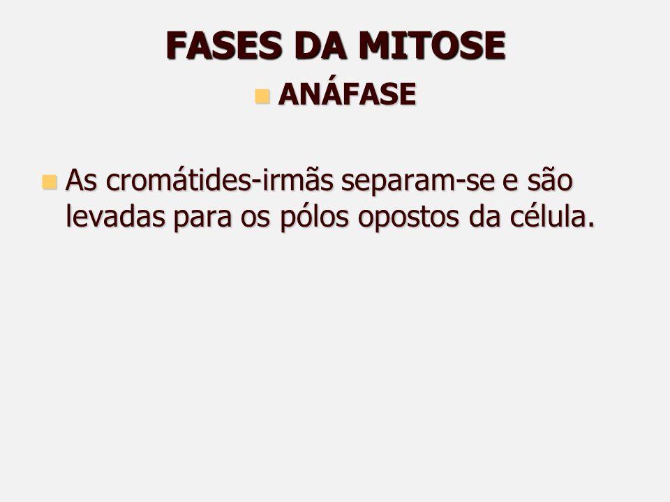 FASES DA MITOSE ANÁFASE