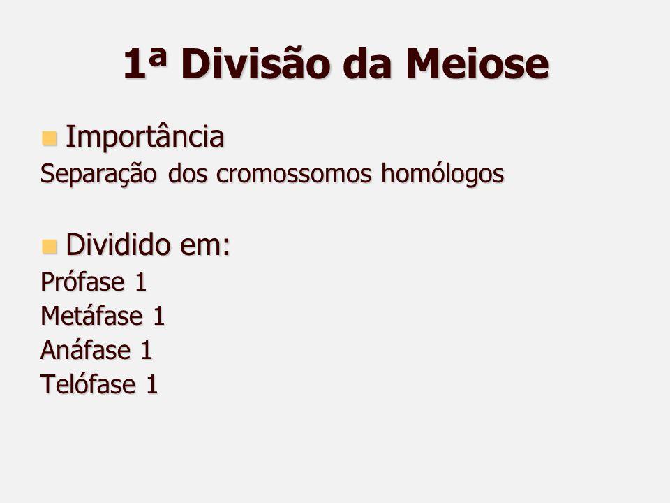 1ª Divisão da Meiose Importância Dividido em: