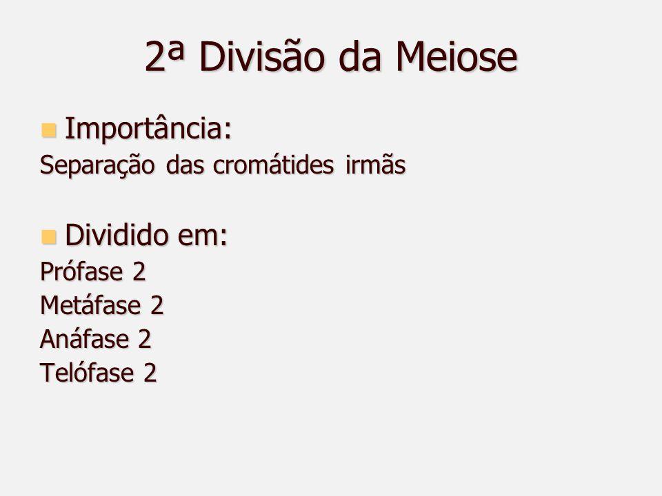 2ª Divisão da Meiose Importância: Dividido em: