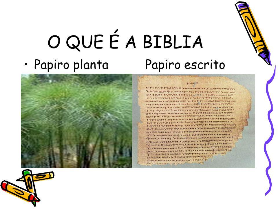 O QUE É A BIBLIA Papiro planta Papiro escrito