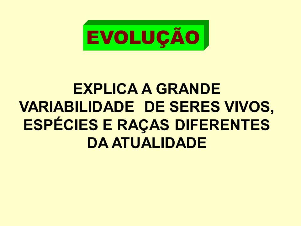 EVOLUÇÃO EXPLICA A GRANDE VARIABILIDADE DE SERES VIVOS, ESPÉCIES E RAÇAS DIFERENTES DA ATUALIDADE