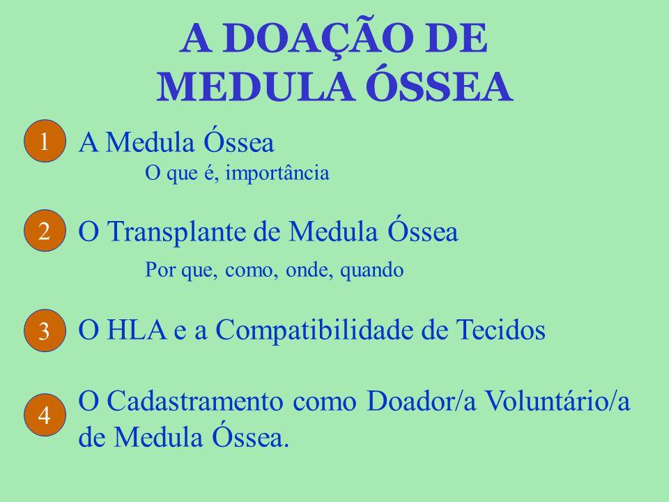 A DOAÇÃO DE MEDULA ÓSSEA