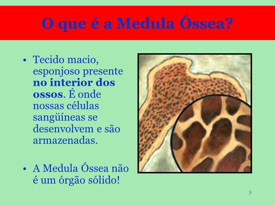 O que é a Medula Óssea Tecido macio, esponjoso presente no interior dos ossos. É onde nossas células sangüíneas se desenvolvem e são armazenadas.