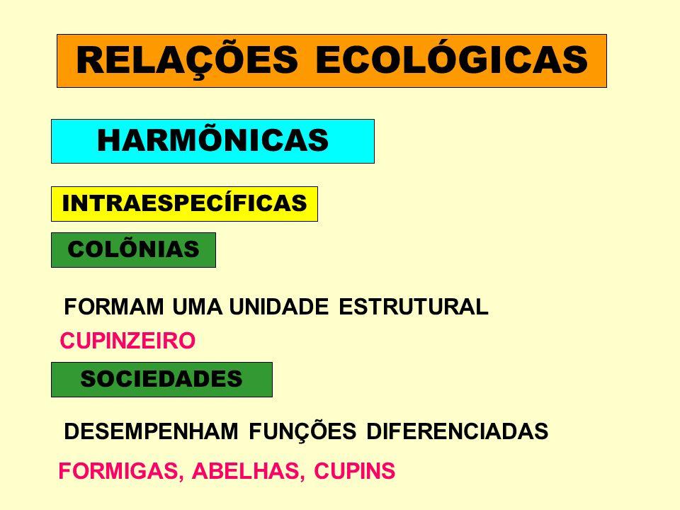 RELAÇÕES ECOLÓGICAS HARMÕNICAS INTRAESPECÍFICAS COLÕNIAS