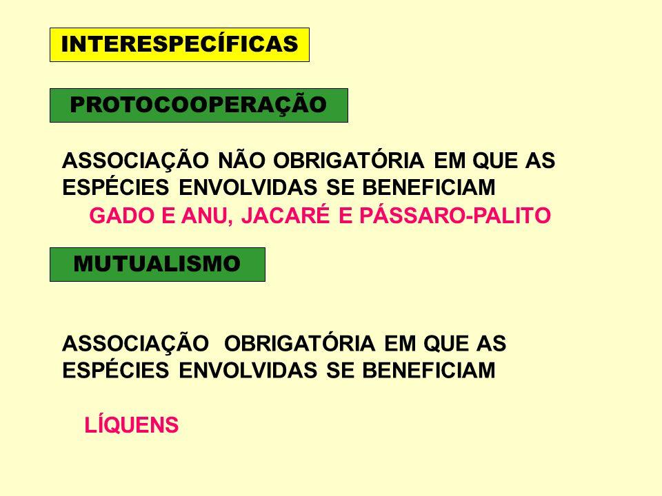 GADO E ANU, JACARÉ E PÁSSARO-PALITO