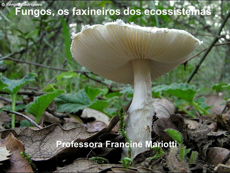 Professora Francine Mariotti