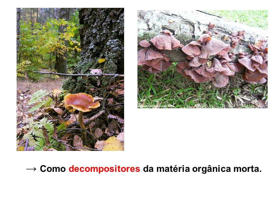 → Como decompositores da matéria orgânica morta.