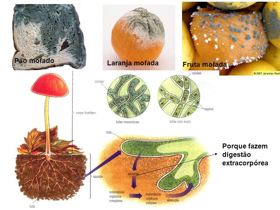 Pão mofado Laranja mofada Fruta mofada Porque fazem digestão extracorpórea