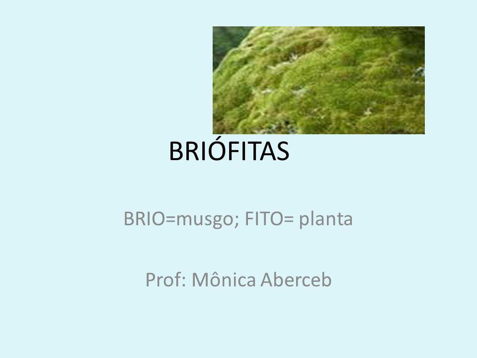 BRIO=musgo; FITO= planta Prof: Mônica Aberceb