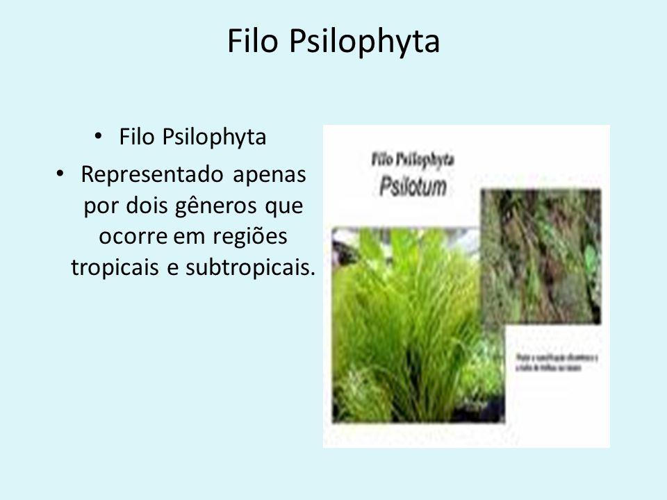 Filo Psilophyta Filo Psilophyta
