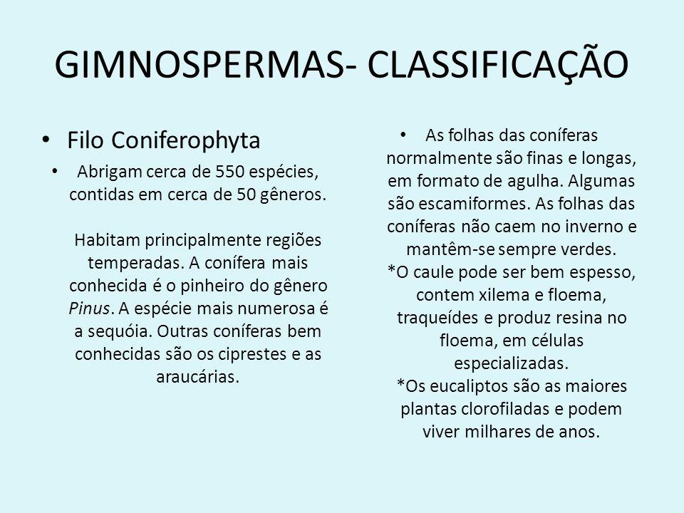GIMNOSPERMAS- CLASSIFICAÇÃO