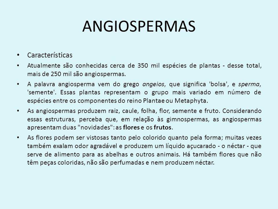 ANGIOSPERMAS Características