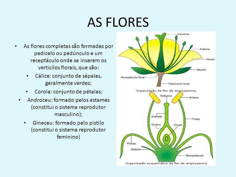 AS FLORES As flores completas são formadas por pedicelo ou pedúnculo e um receptáculo onde se inserem os verticilos florais, que são: