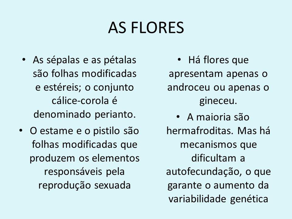 Há flores que apresentam apenas o androceu ou apenas o gineceu.