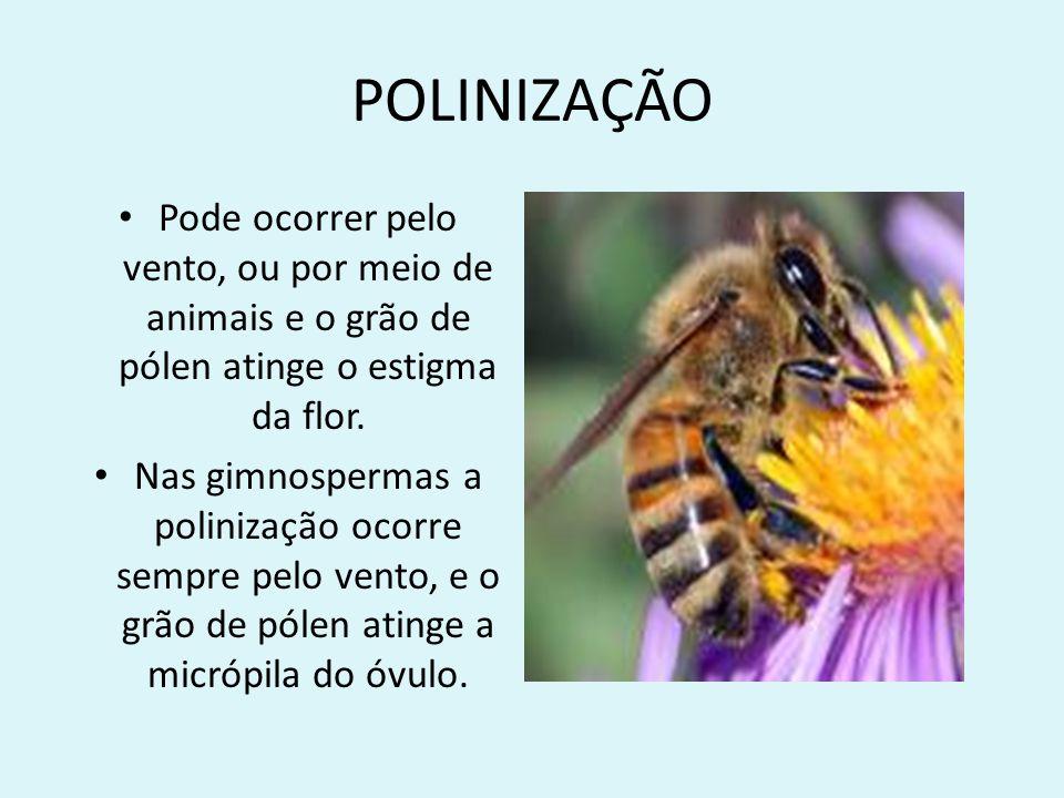 POLINIZAÇÃO Pode ocorrer pelo vento, ou por meio de animais e o grão de pólen atinge o estigma da flor.