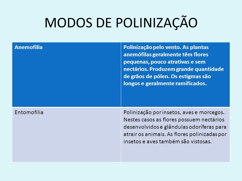 MODOS DE POLINIZAÇÃO Anemofilia