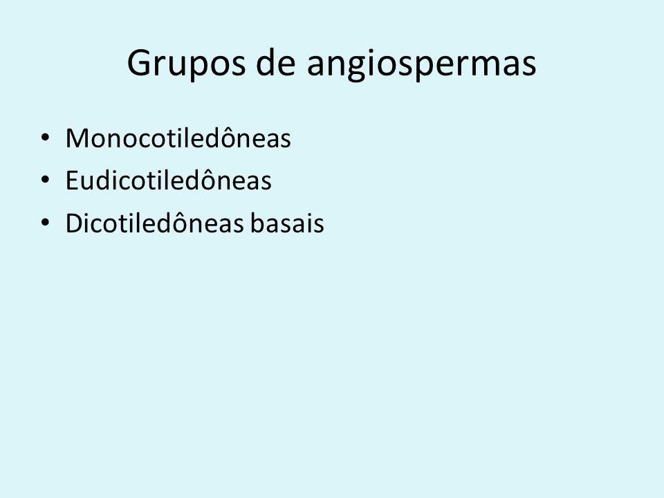 Grupos de angiospermas