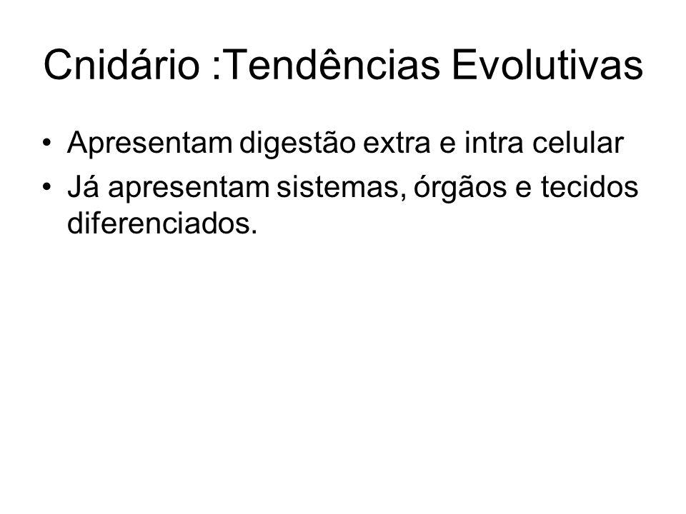 Cnidário :Tendências Evolutivas