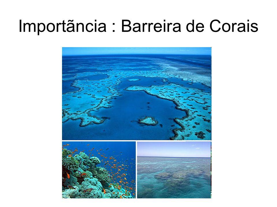Importãncia : Barreira de Corais
