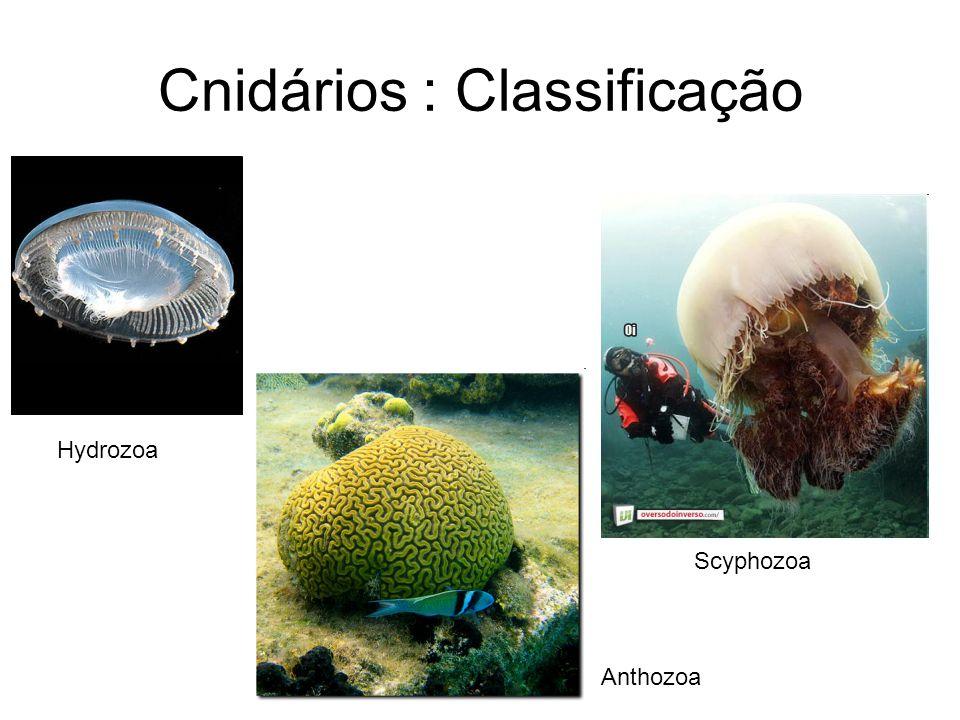 Cnidários : Classificação