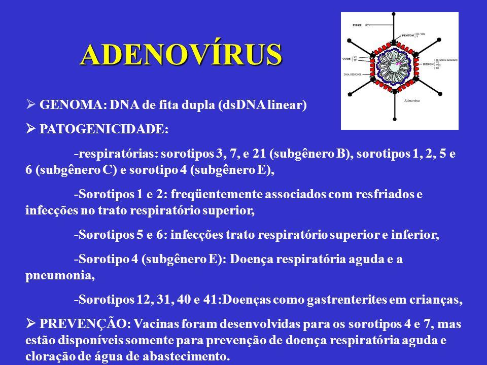ADENOVÍRUS  GENOMA: DNA de fita dupla (dsDNA linear)