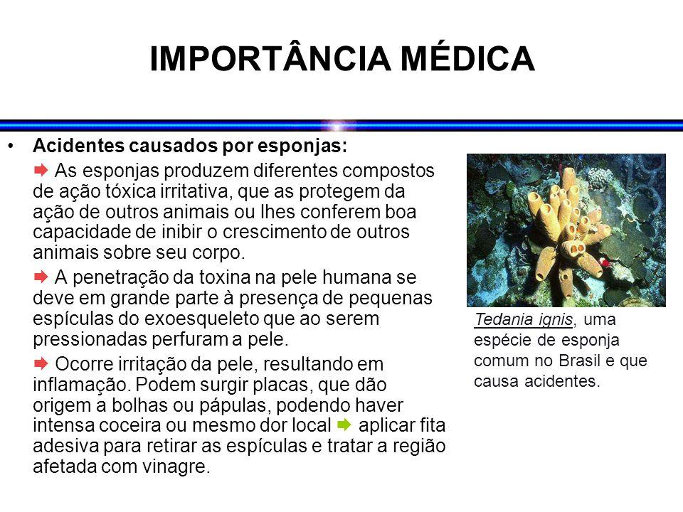 IMPORTÂNCIA MÉDICA Acidentes causados por esponjas: