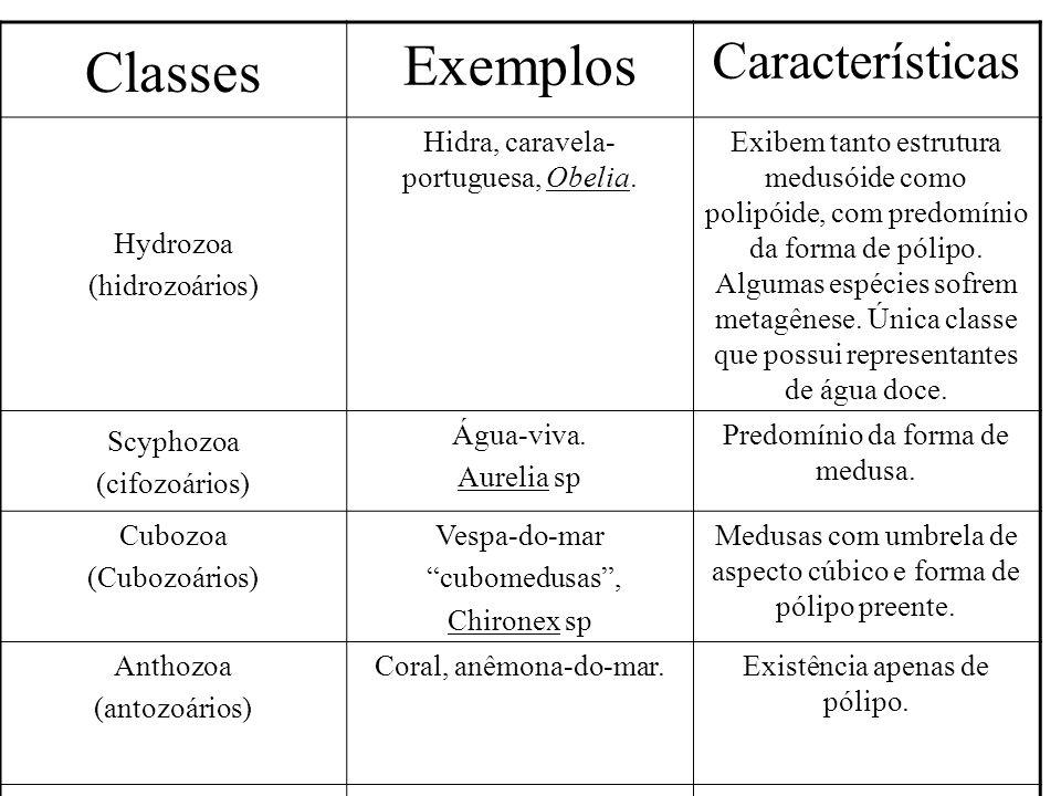 Classes Exemplos Características Hydrozoa (hidrozoários)