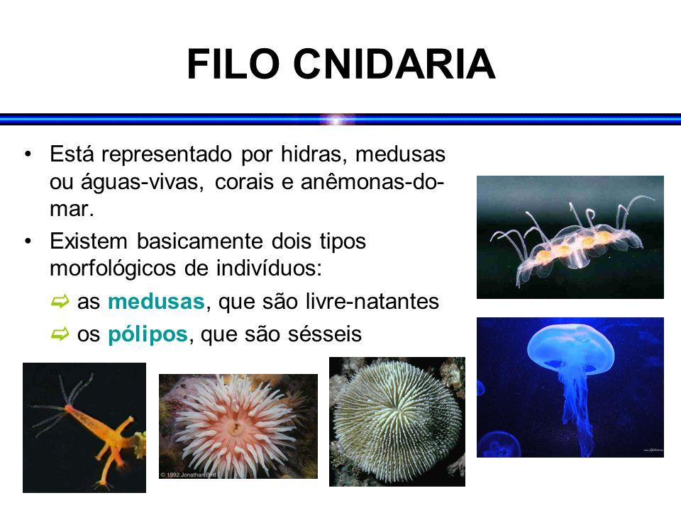 FILO CNIDARIA Está representado por hidras, medusas ou águas-vivas, corais e anêmonas-do-mar.