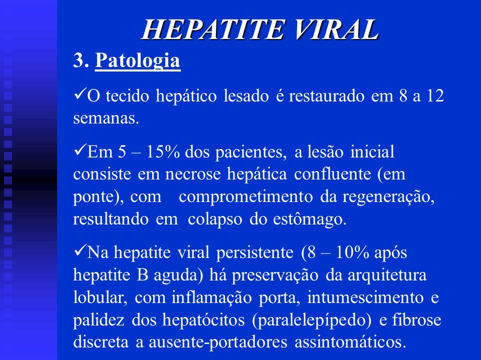 HEPATITE VIRAL 3. Patologia