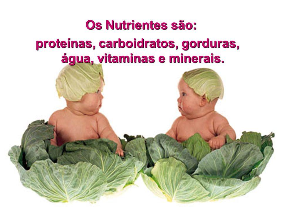 proteínas, carboidratos, gorduras, água, vitaminas e minerais.
