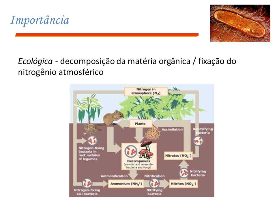 Importância Ecológica - decomposição da matéria orgânica / fixação do nitrogênio atmosférico