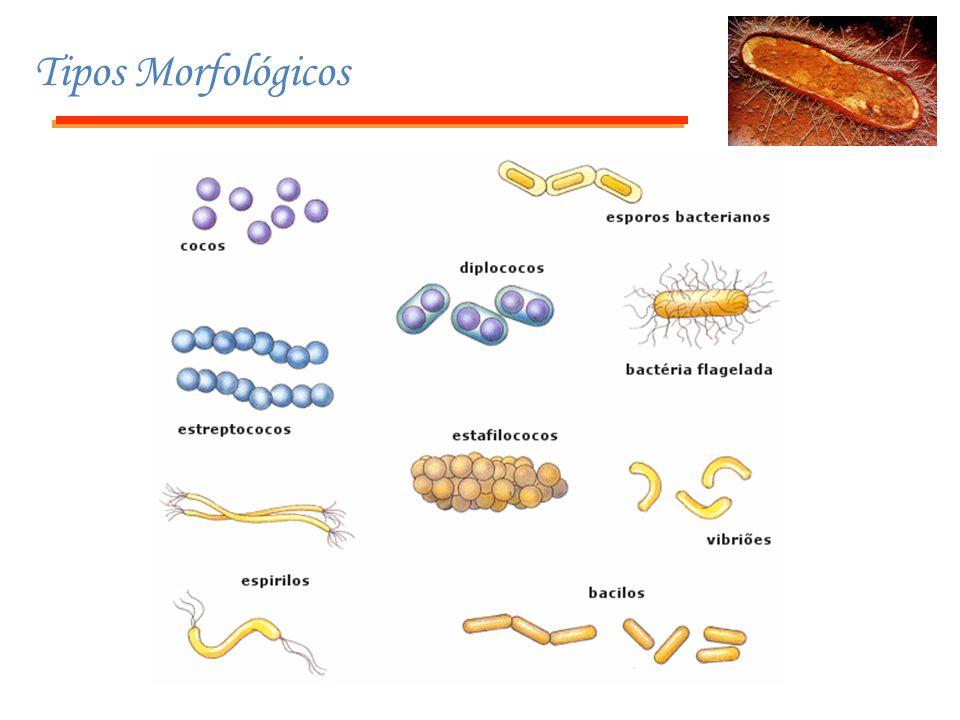 Tipos Morfológicos
