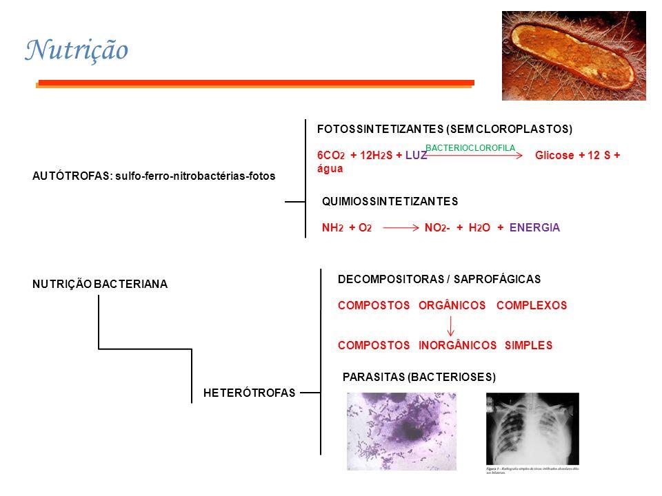 Nutrição FOTOSSINTETIZANTES (SEM CLOROPLASTOS)