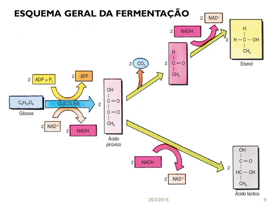 ESQUEMA GERAL DA FERMENTAÇÃO