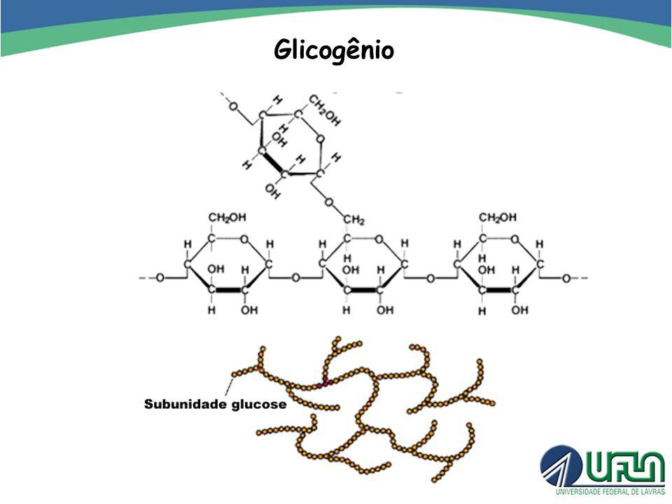 Glicogênio