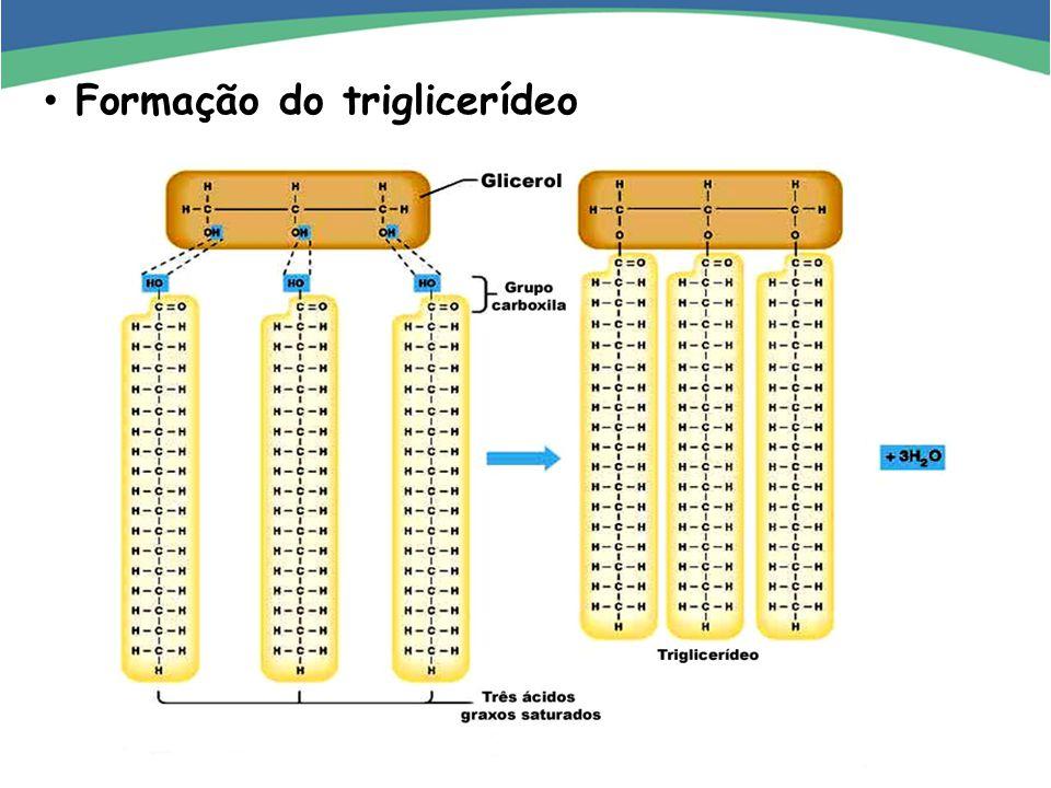 Formação do triglicerídeo