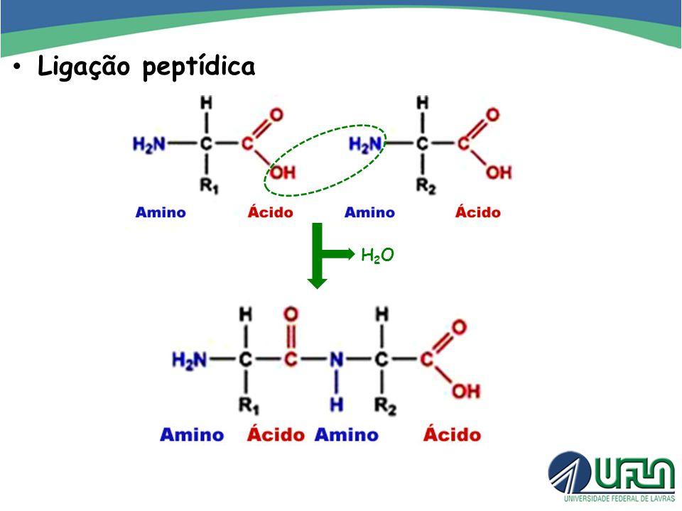 Ligação peptídica H2O