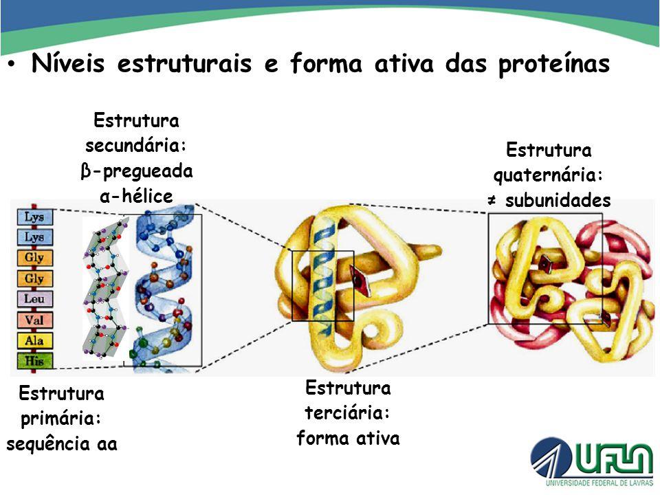 Níveis estruturais e forma ativa das proteínas
