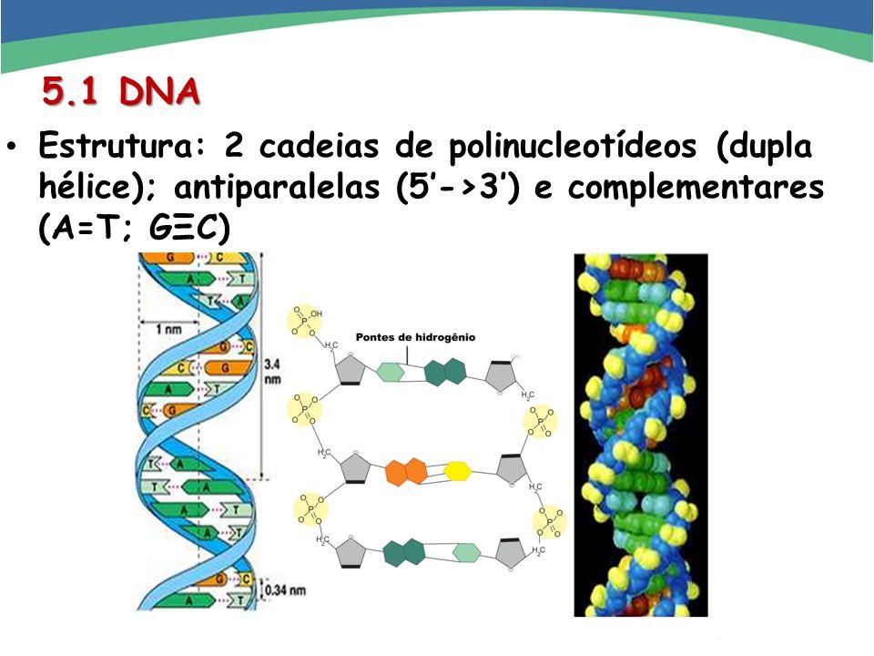 5.1 DNA Estrutura: 2 cadeias de polinucleotídeos (dupla hélice); antiparalelas (5'->3') e complementares (A=T; GΞC)