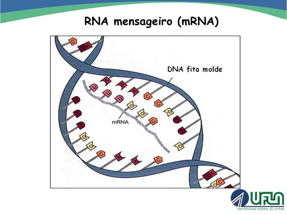 RNA mensageiro (mRNA)