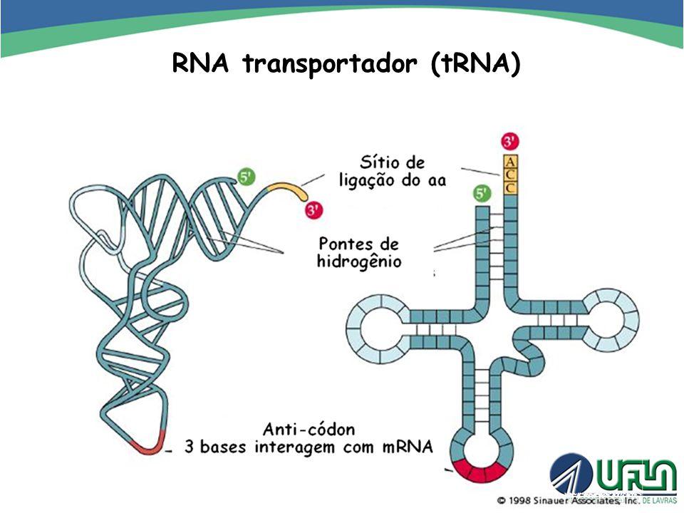 RNA transportador (tRNA)