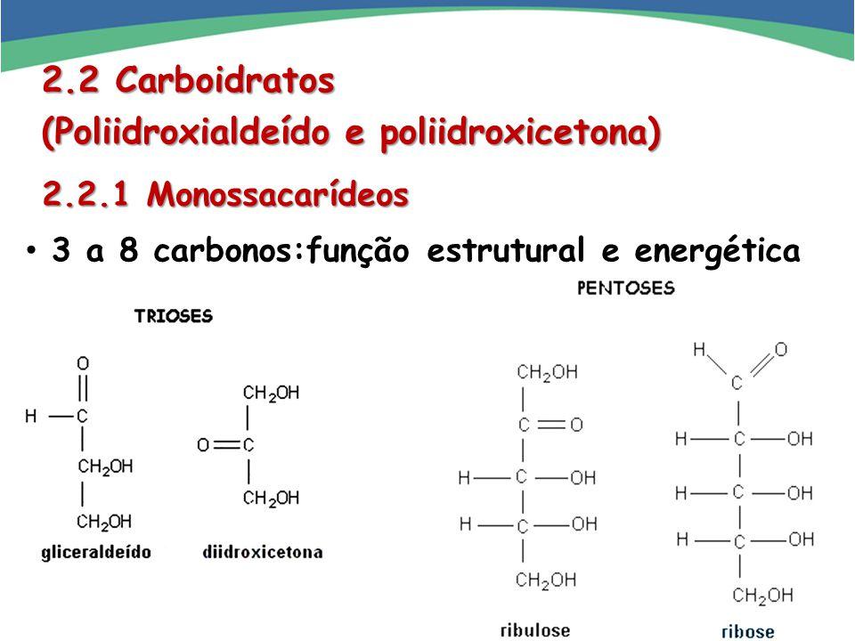 (Poliidroxialdeído e poliidroxicetona)