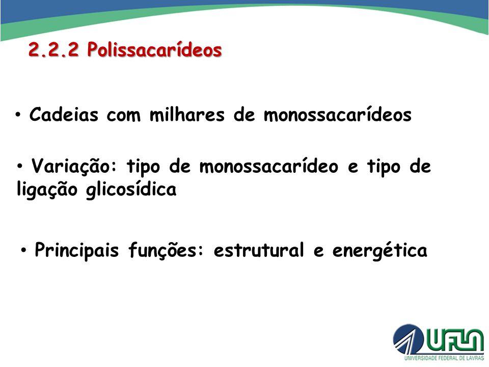 2.2.2 Polissacarídeos Cadeias com milhares de monossacarídeos. Variação: tipo de monossacarídeo e tipo de ligação glicosídica.