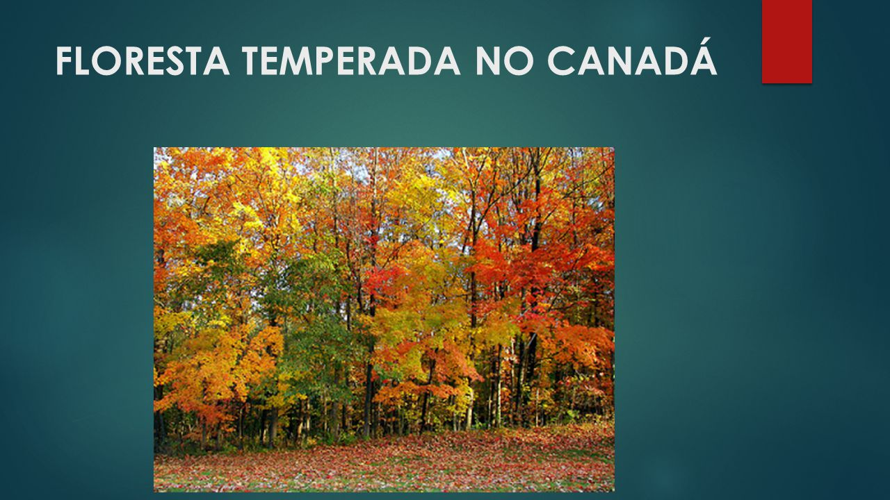 FLORESTA TEMPERADA NO CANADÁ