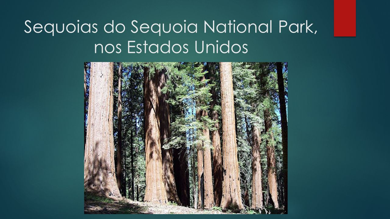Sequoias do Sequoia National Park, nos Estados Unidos