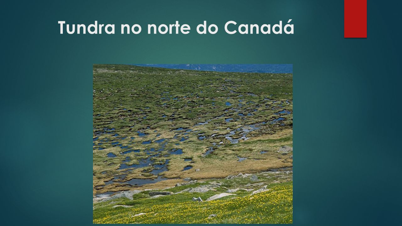 Tundra no norte do Canadá