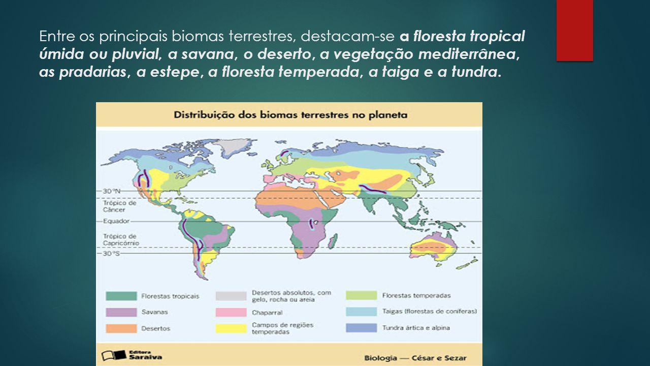 Entre os principais biomas terrestres, destacam-se a floresta tropical úmida ou pluvial, a savana, o deserto, a vegetação mediterrânea, as pradarias, a estepe, a floresta temperada, a taiga e a tundra.