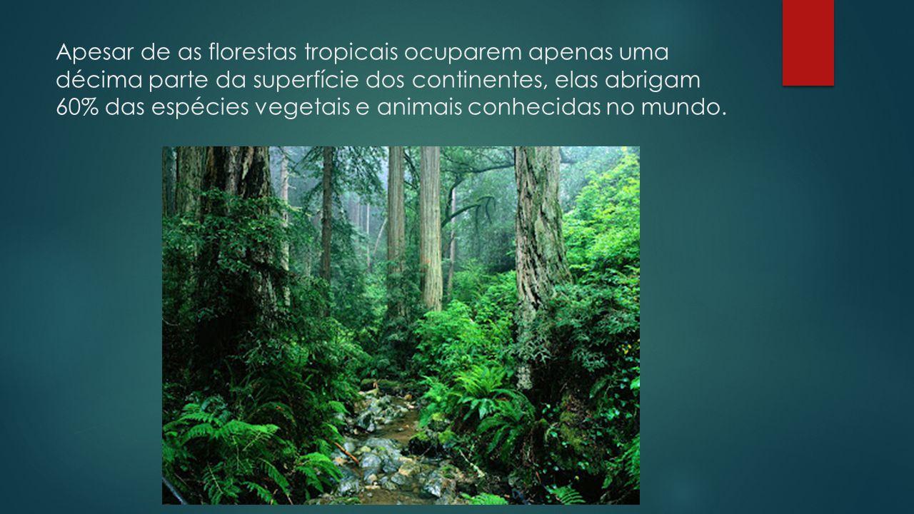 Apesar de as florestas tropicais ocuparem apenas uma décima parte da superfície dos continentes, elas abrigam 60% das espécies vegetais e animais conhecidas no mundo.