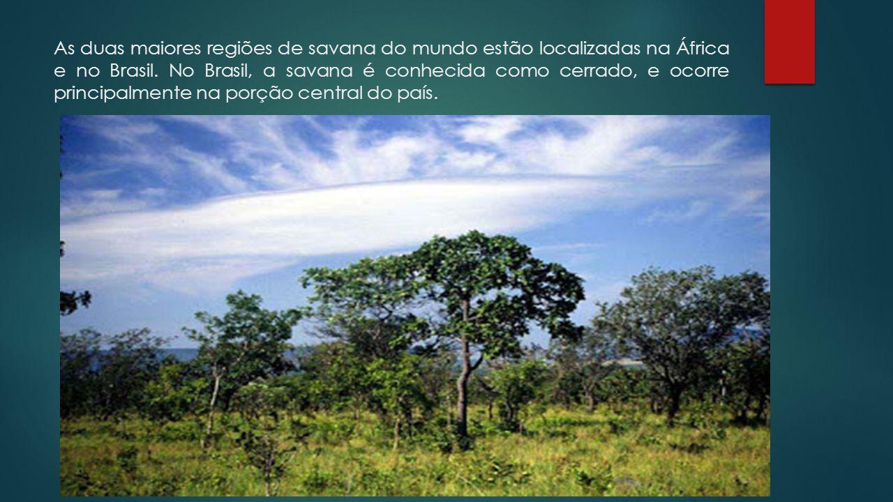 As duas maiores regiões de savana do mundo estão localizadas na África e no Brasil.