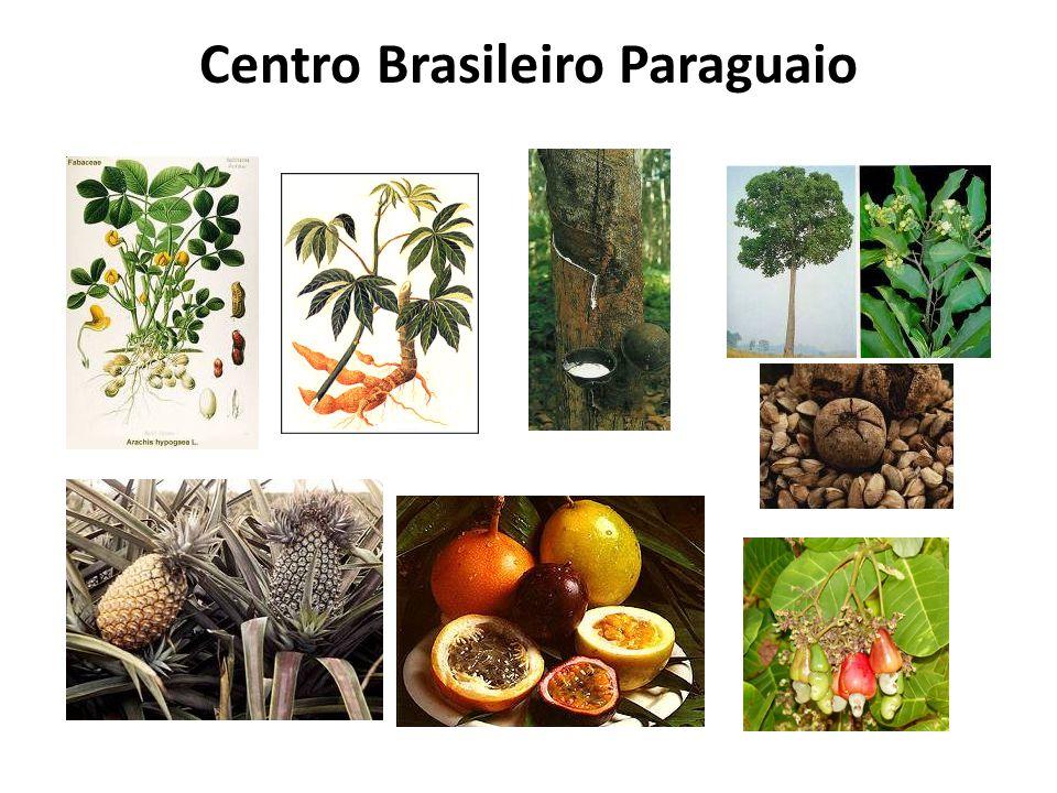 Centro Brasileiro Paraguaio